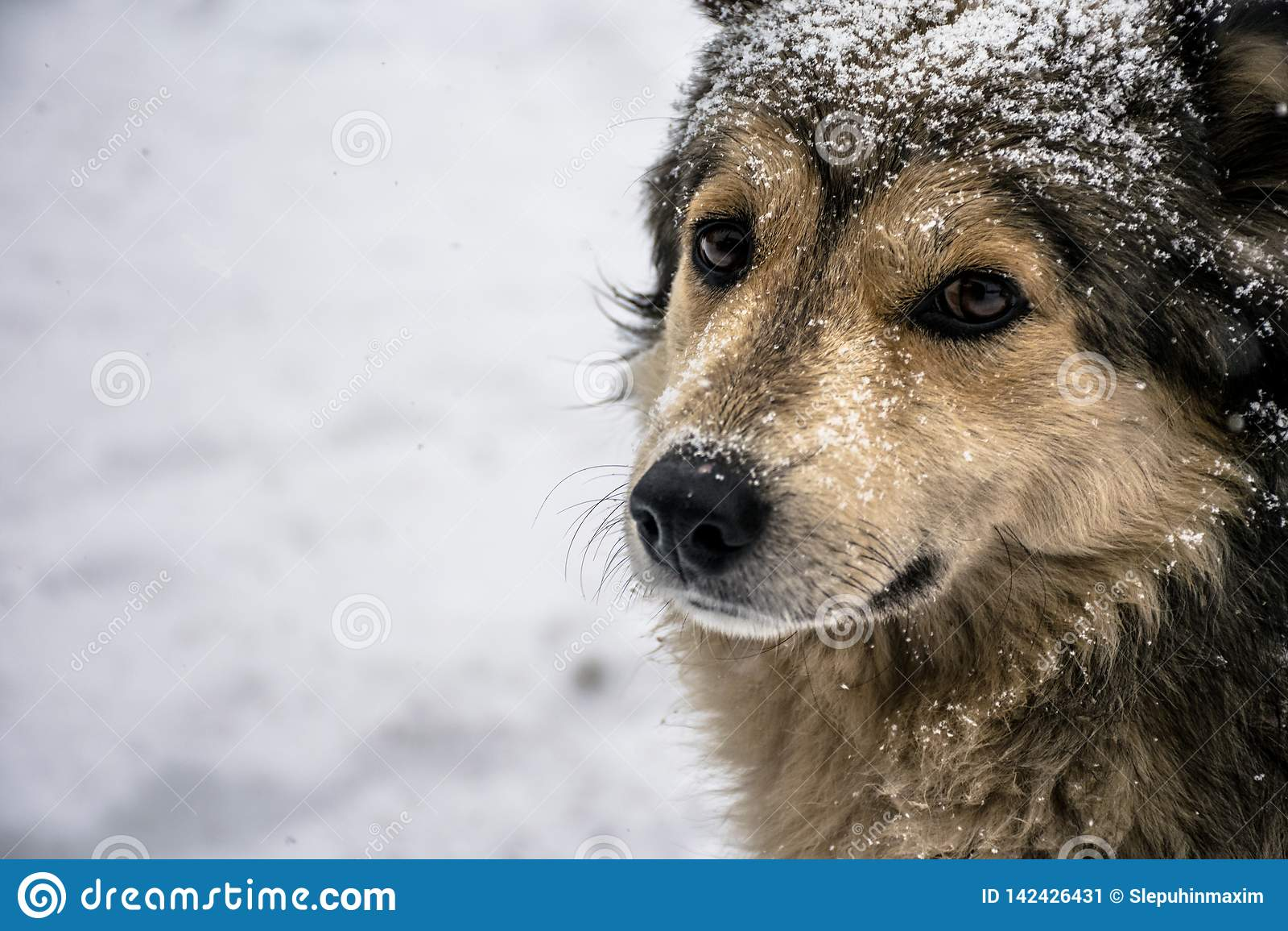 Portrait of a cute dog with kind sad eyes