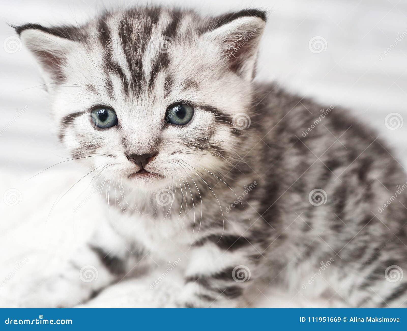 Portrait Of A Cute Kitten Stock Image Image Of Feline 111951669