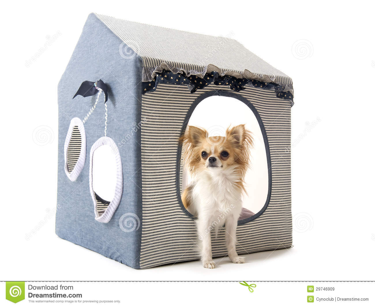 chihuahua dog houses chihuahua in house dog royalty free stock images image 7867