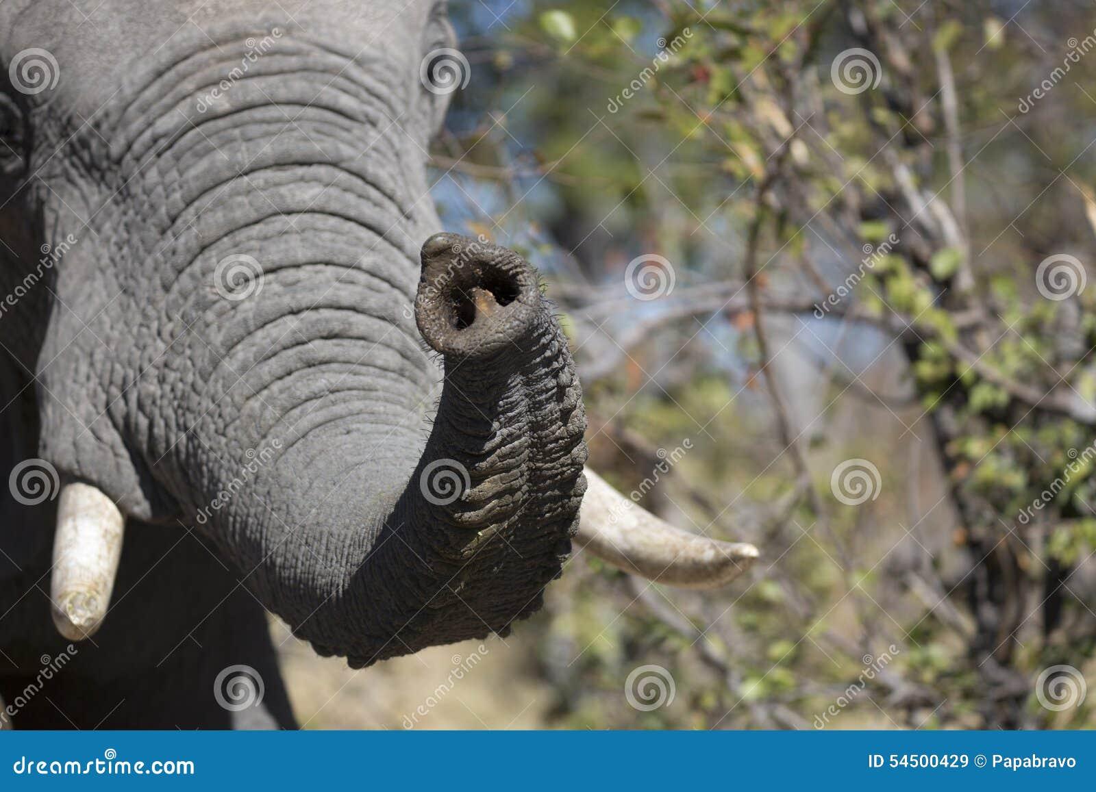 Portrait d éléphant gratuit sauvage