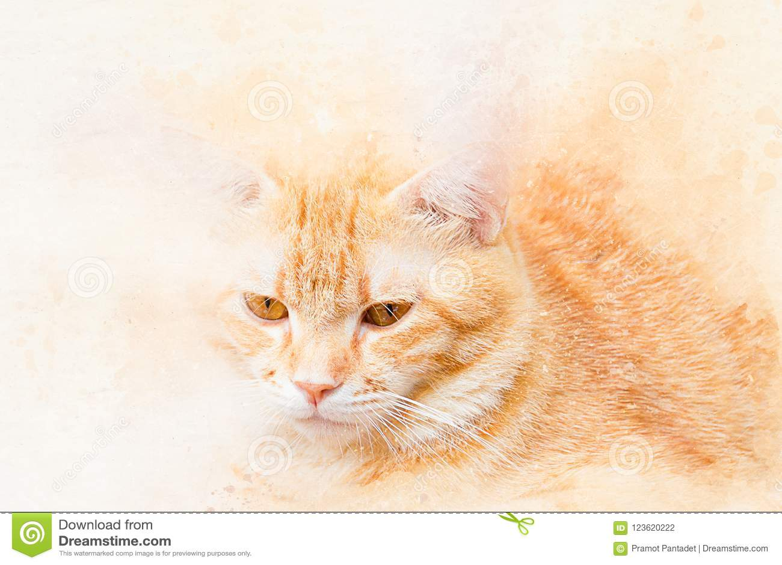 Portrait Daquarelle De Chat Orange Couleur De Peinture Dart Sur La
