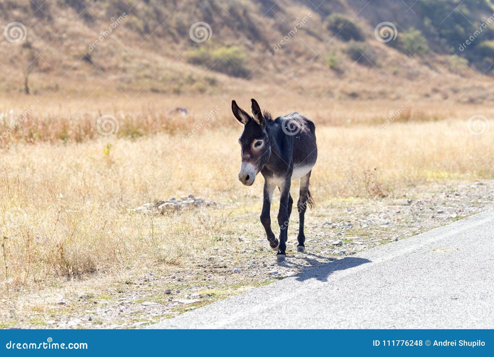 Portrait d un âne l automne de nature