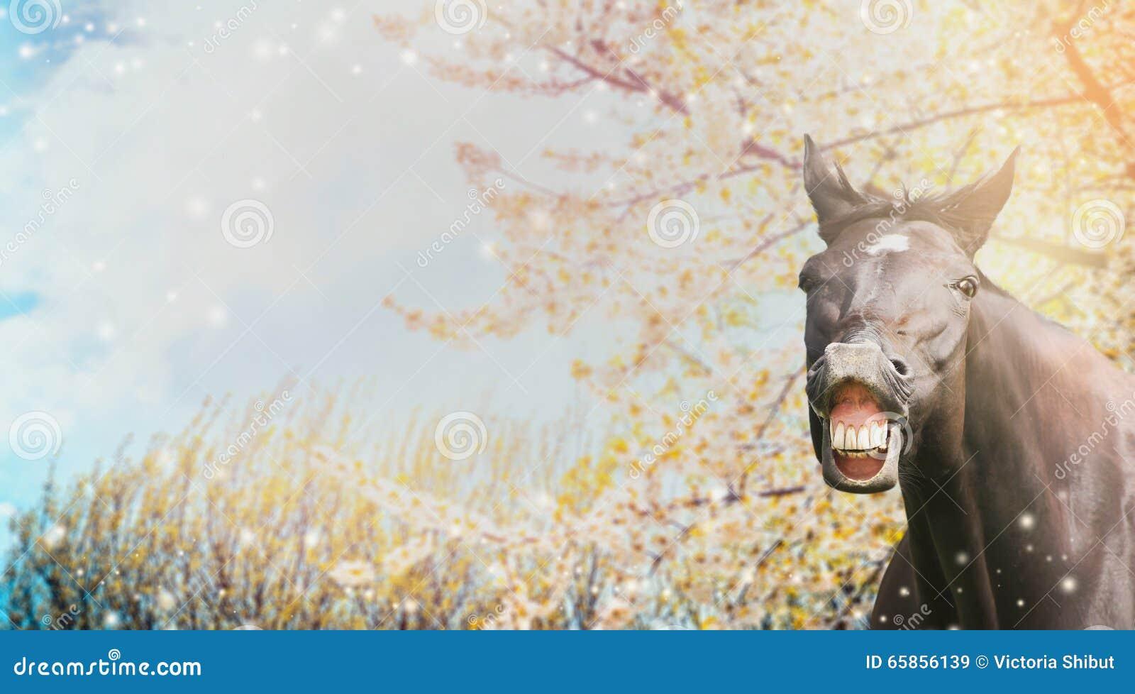 Portrait d un cheval avec un sourire sur le fond de la nature de fleur de ressort