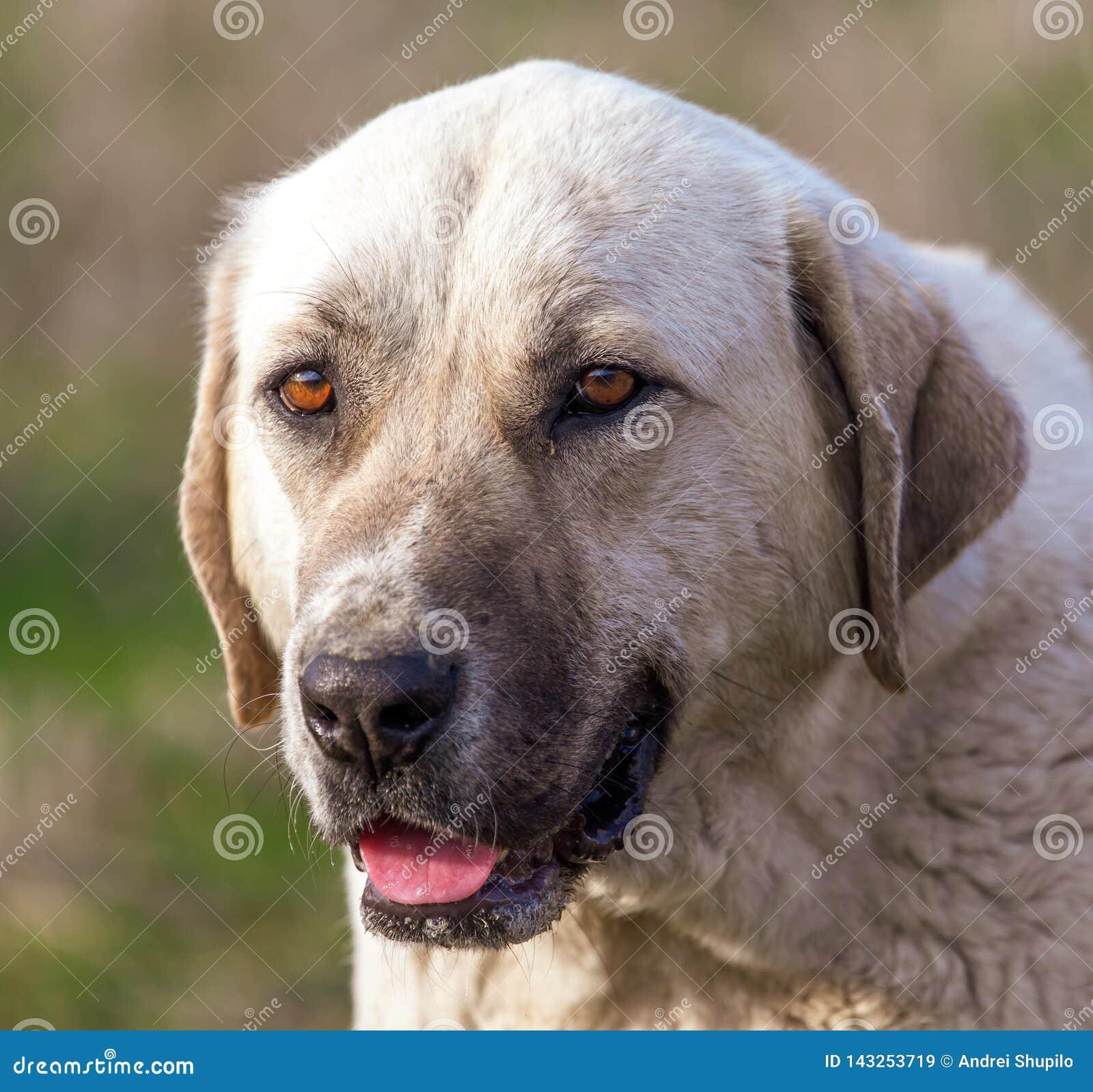 Portrait d un chien pendant l après-midi