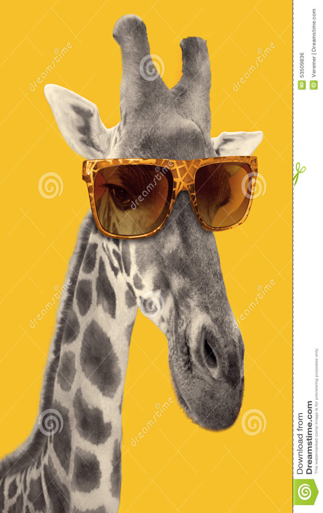 Portrait d 39 une girafe avec des lunettes de soleil de for Prix d une girafe a poncer