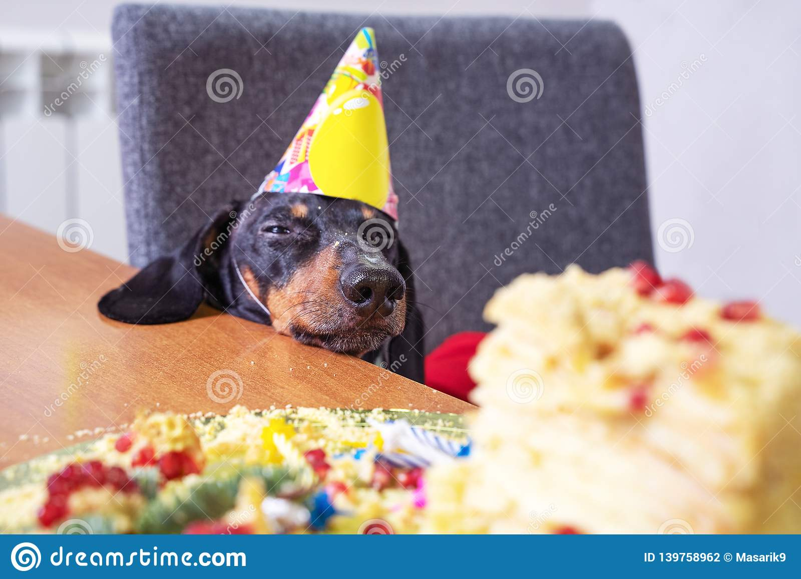 Wondrous Portrait Of A Dachshund Black And Tan In A Festive Hat Fell Funny Birthday Cards Online Unhofree Goldxyz