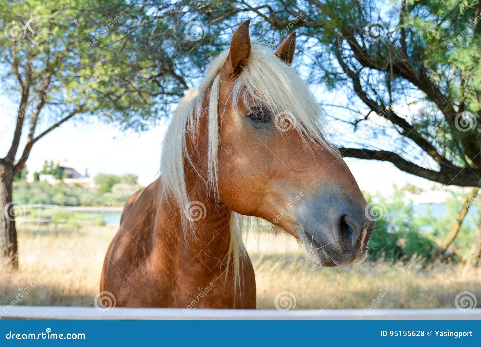 Portrait de beau cheval blond rouge
