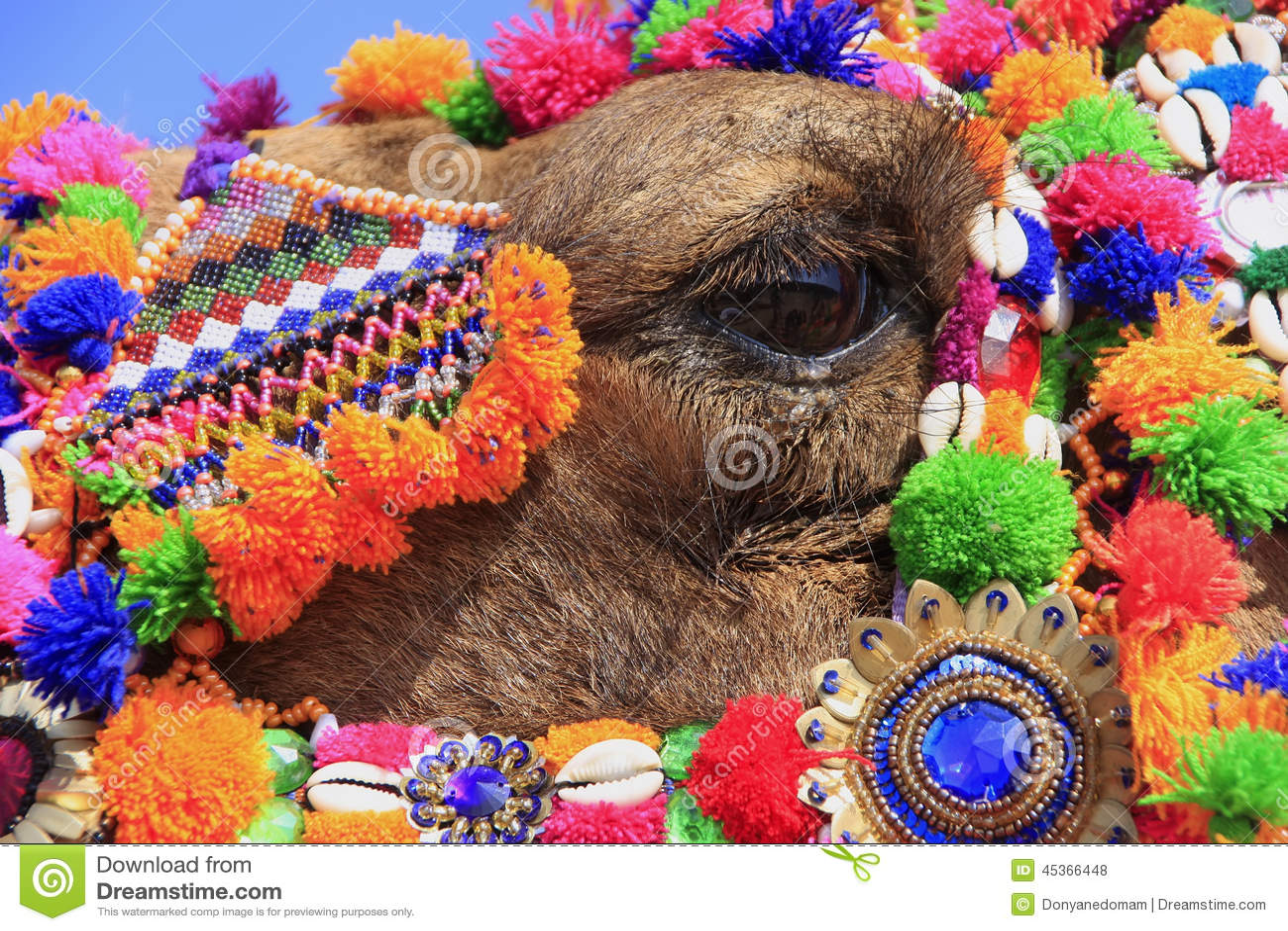 Portrait de chameau décoré au festival de désert, Jaisalmer, Inde