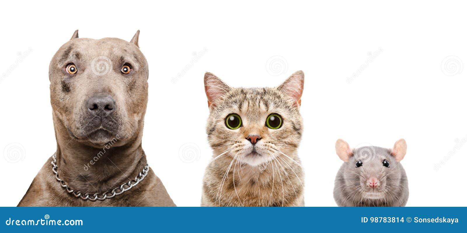 Portrait de chien, de chat et de rat