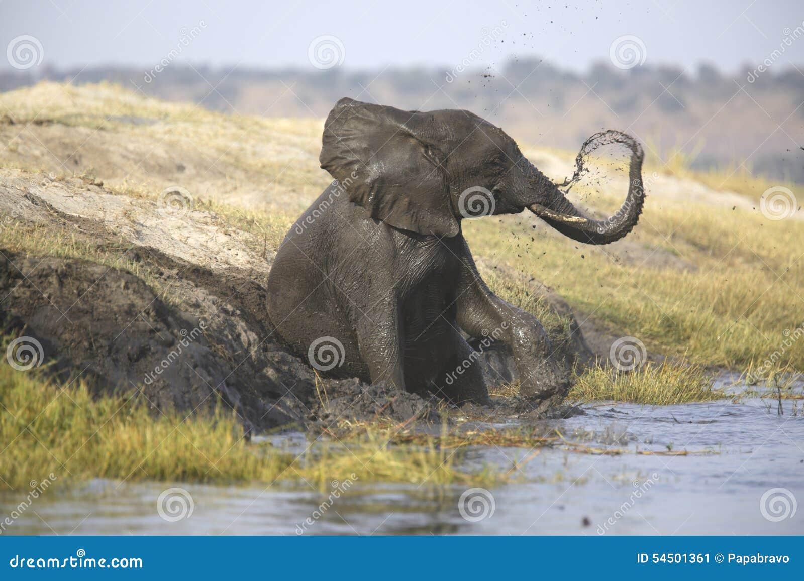 Portrait de l averse gratuite sauvage d éléphant