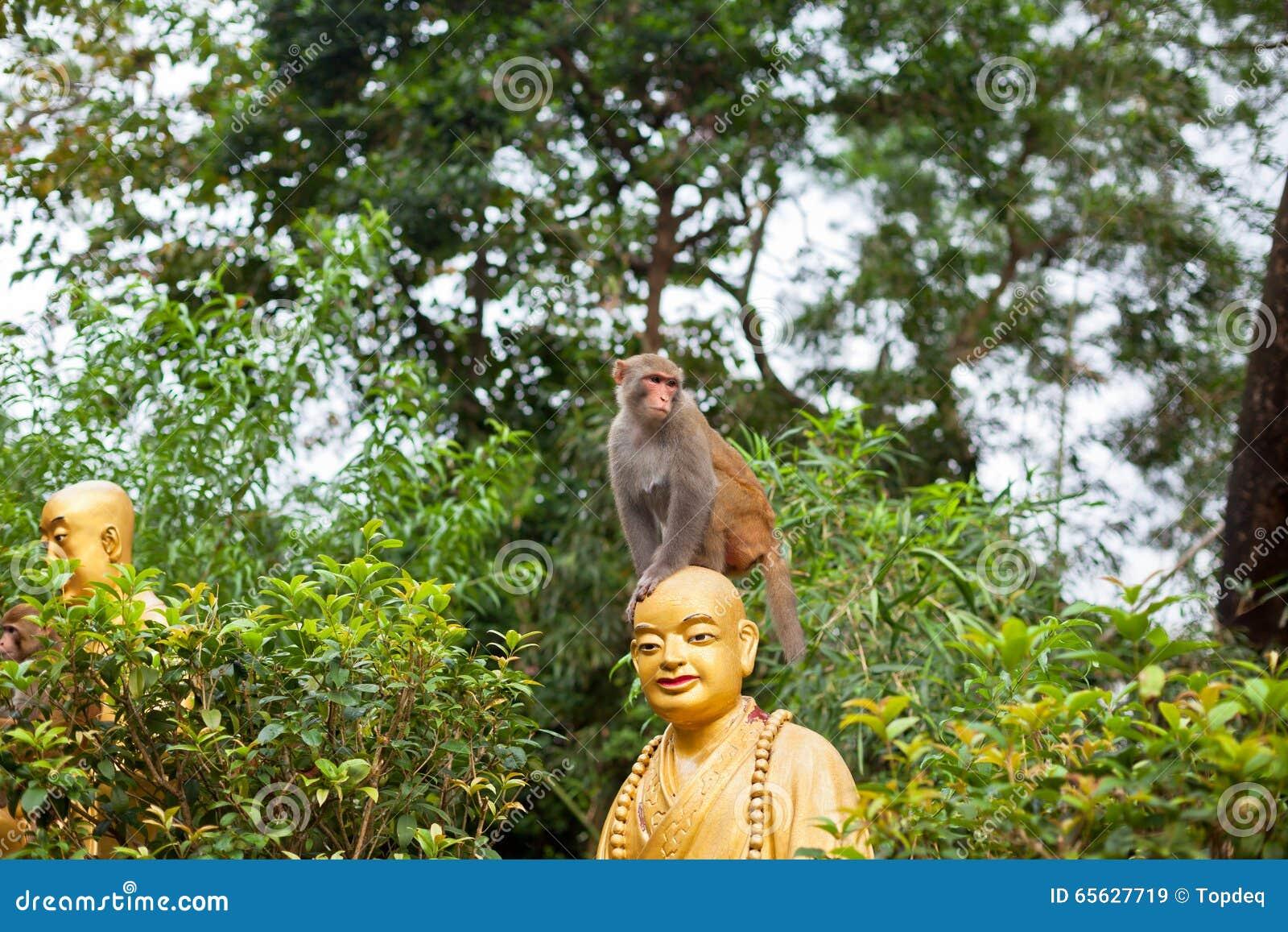 Portrait de singe se reposant sur la statue principale du moine
