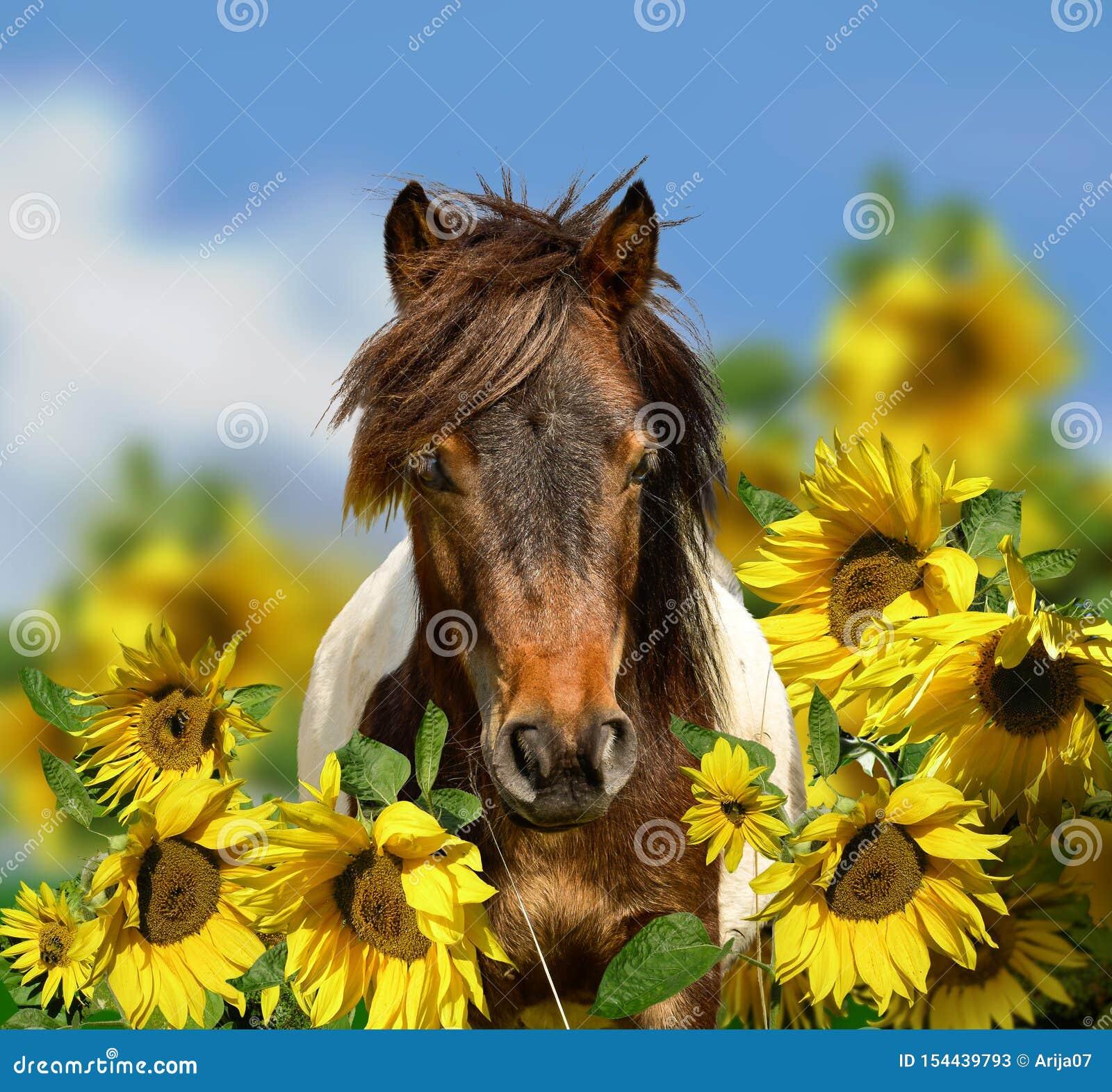 Portrait de tête de cheval de poney avec le pré de wildflowers et le ciel bleu