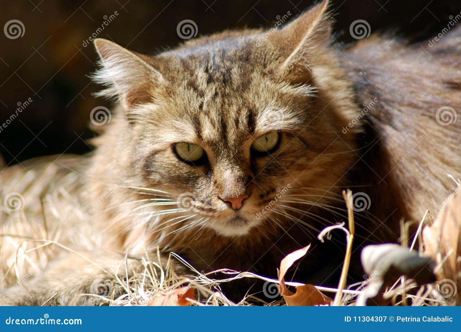 Portrait der großen Katze