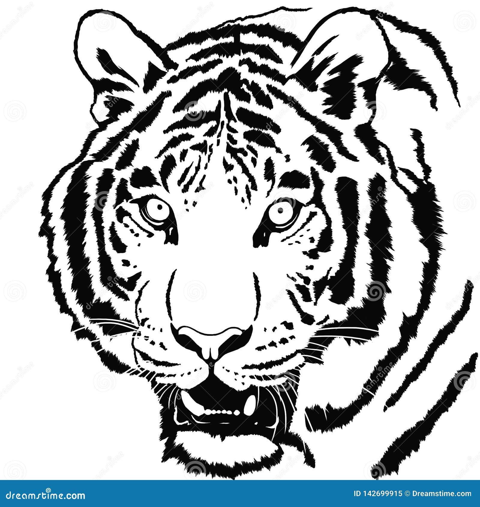 Portrait des Tigers