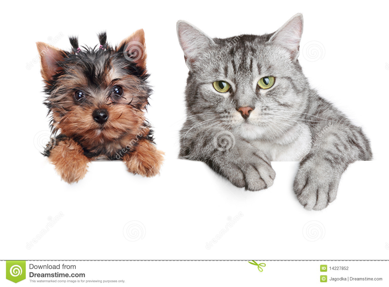 Portrait of a dog and cat