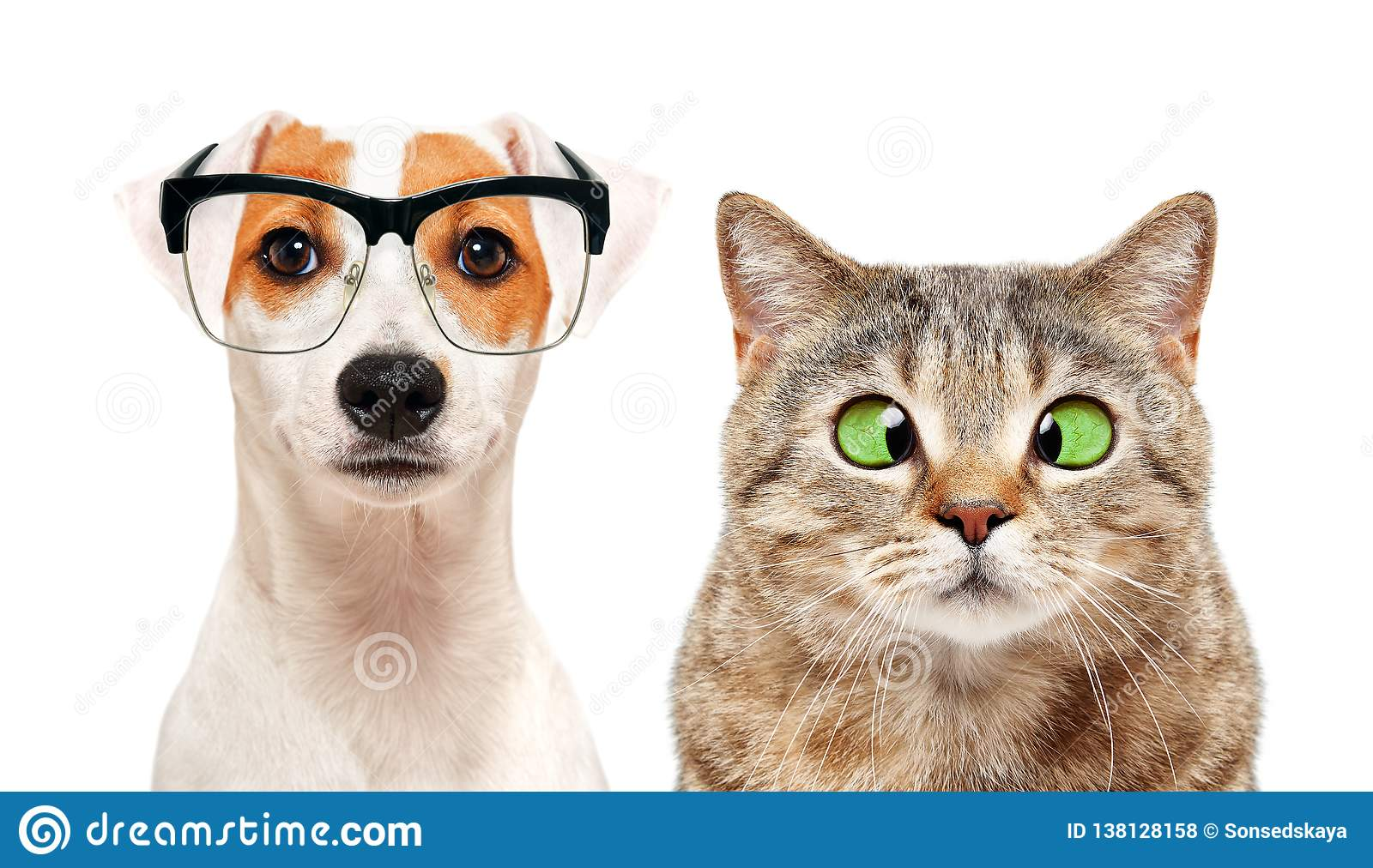 Portrait of dog and cat with eye diseases