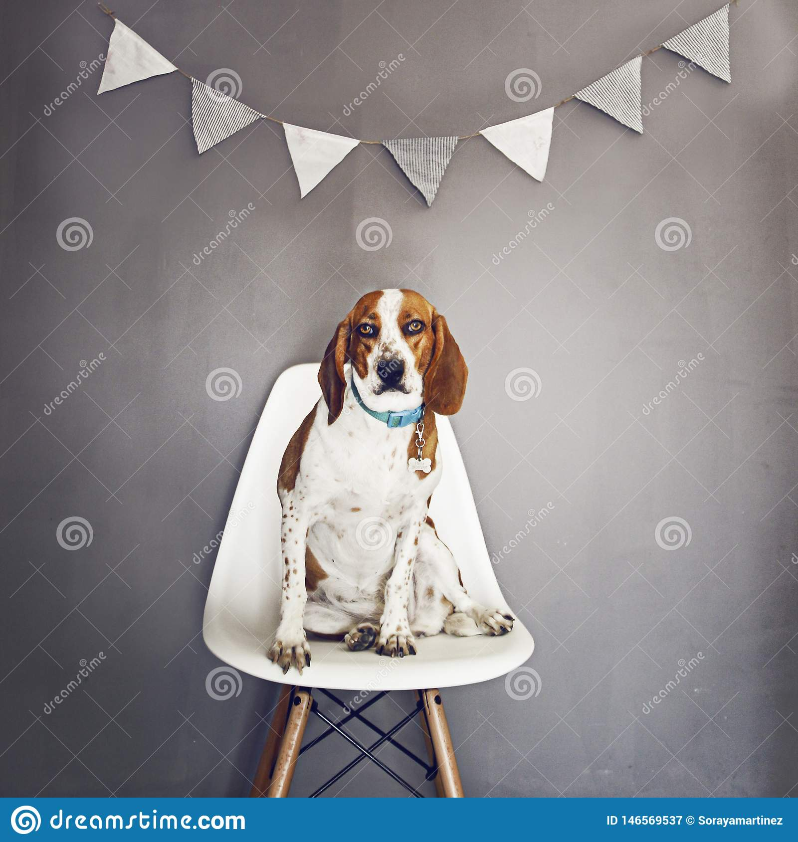 PORTRAIT OF A DOG IN A CHAIR