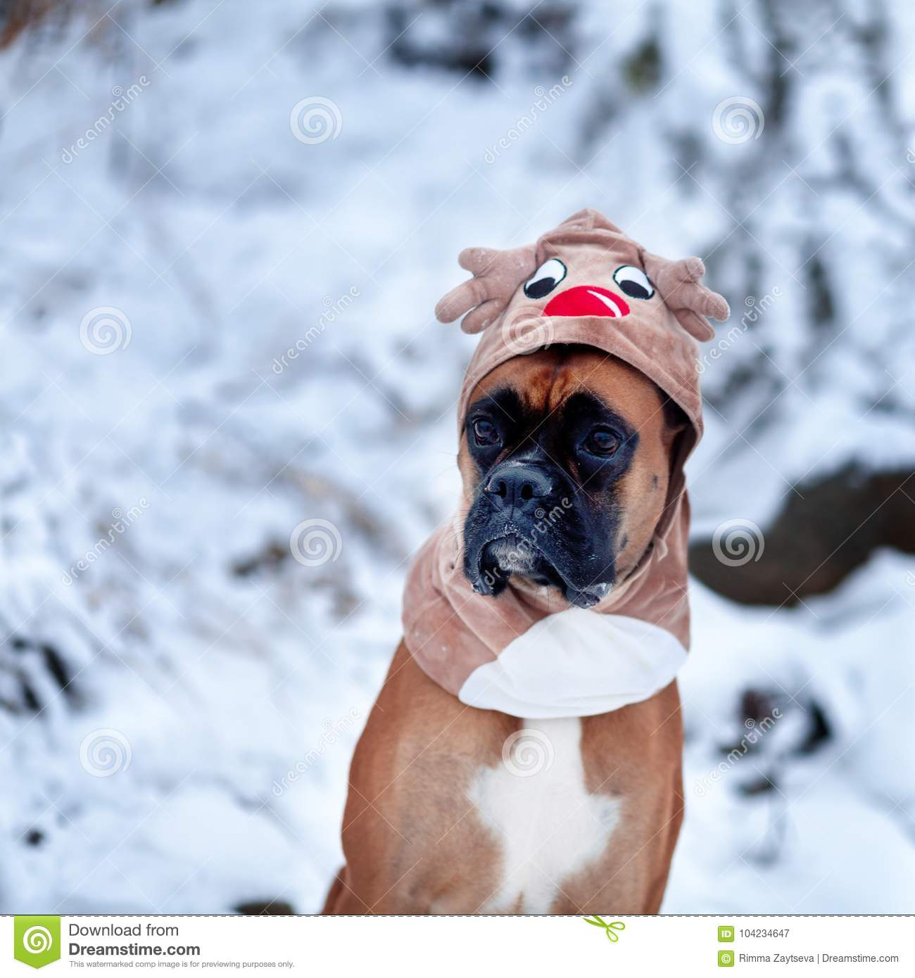 Download comp & Portrait Of Dog In Deer Costume Against Background Of Christmas ...