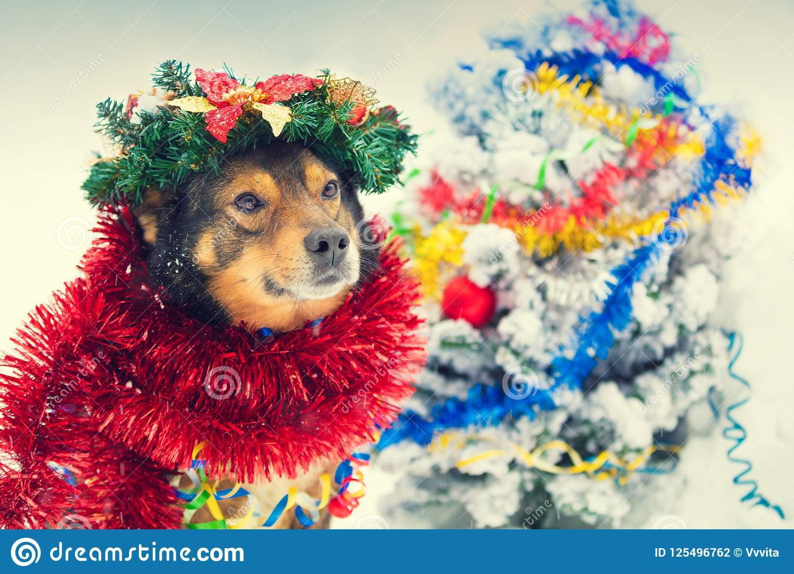 download a dog with christmas decorations sit next to a christmas tree stock photo image