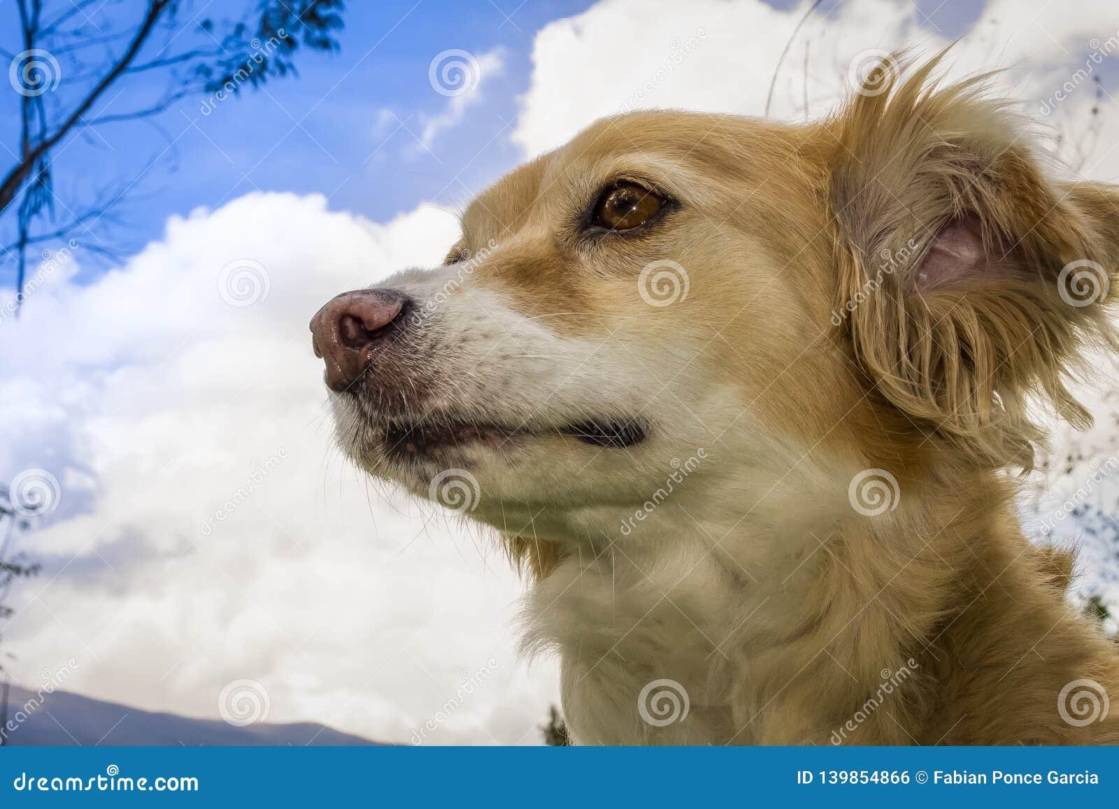 Beautiful mongrel dog yellow with white