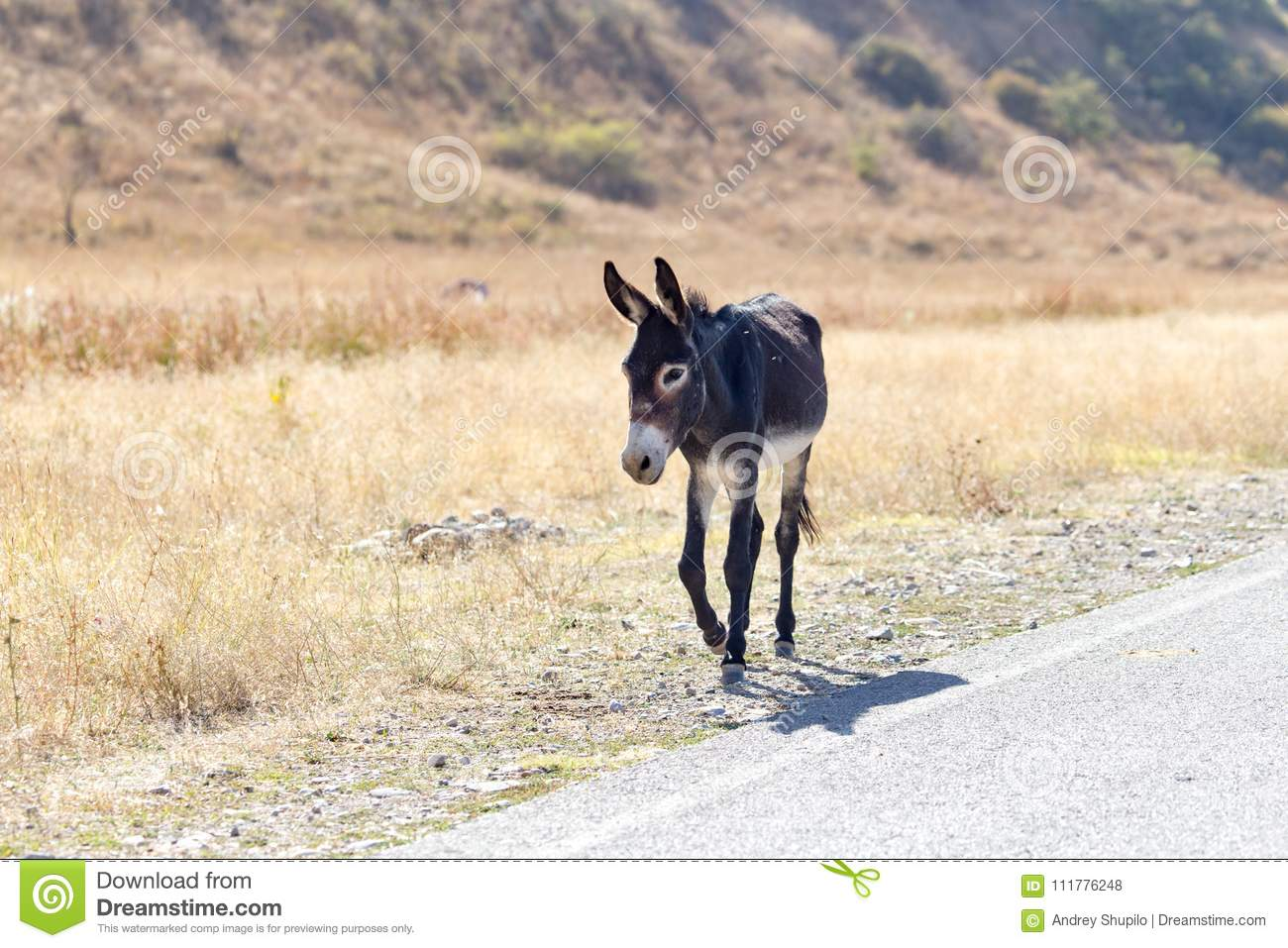 Portrait of a donkey on the nature autumn