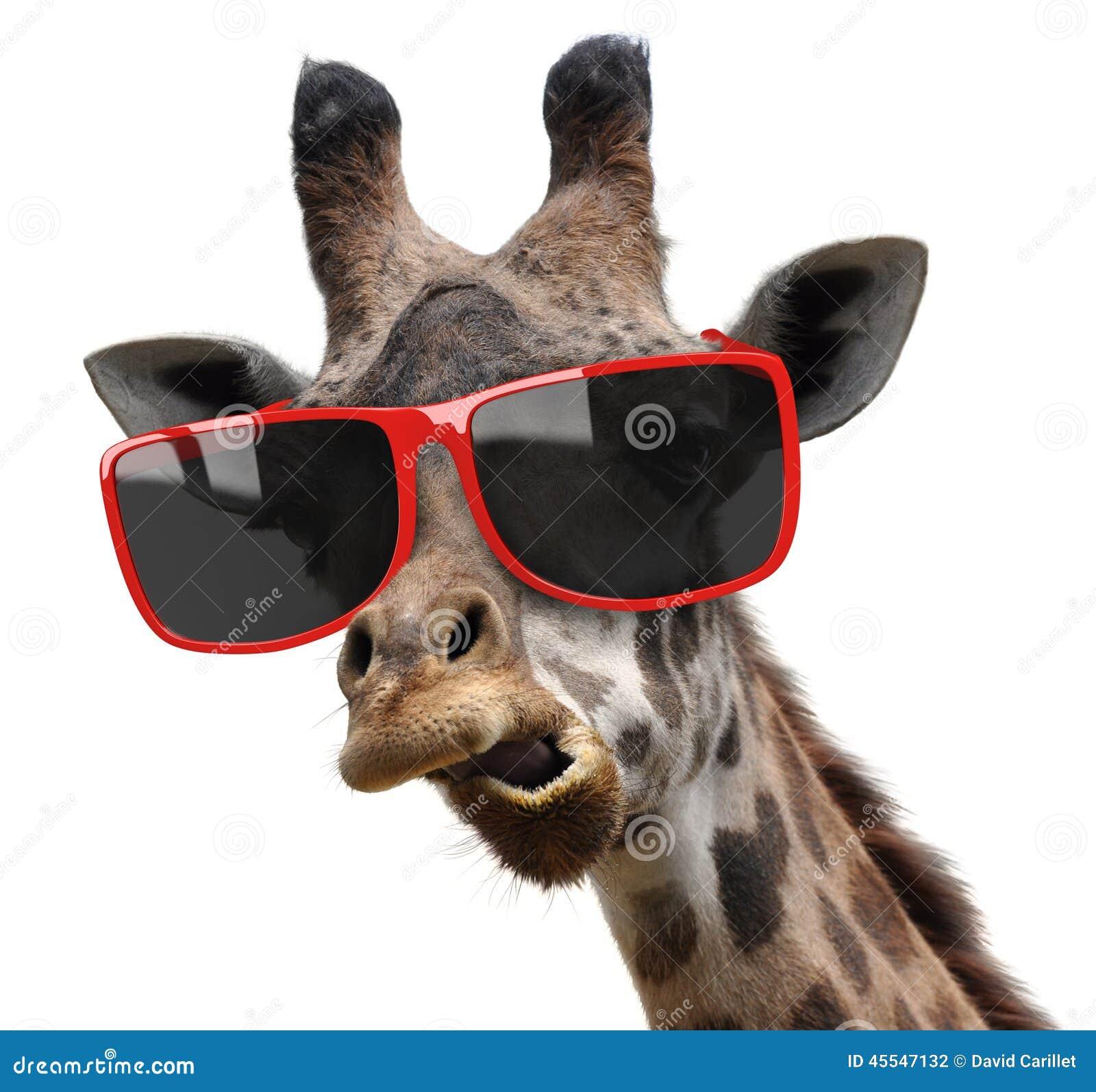 Portrait dr le de mode de mode d 39 une girafe avec les for Prix d une girafe a poncer