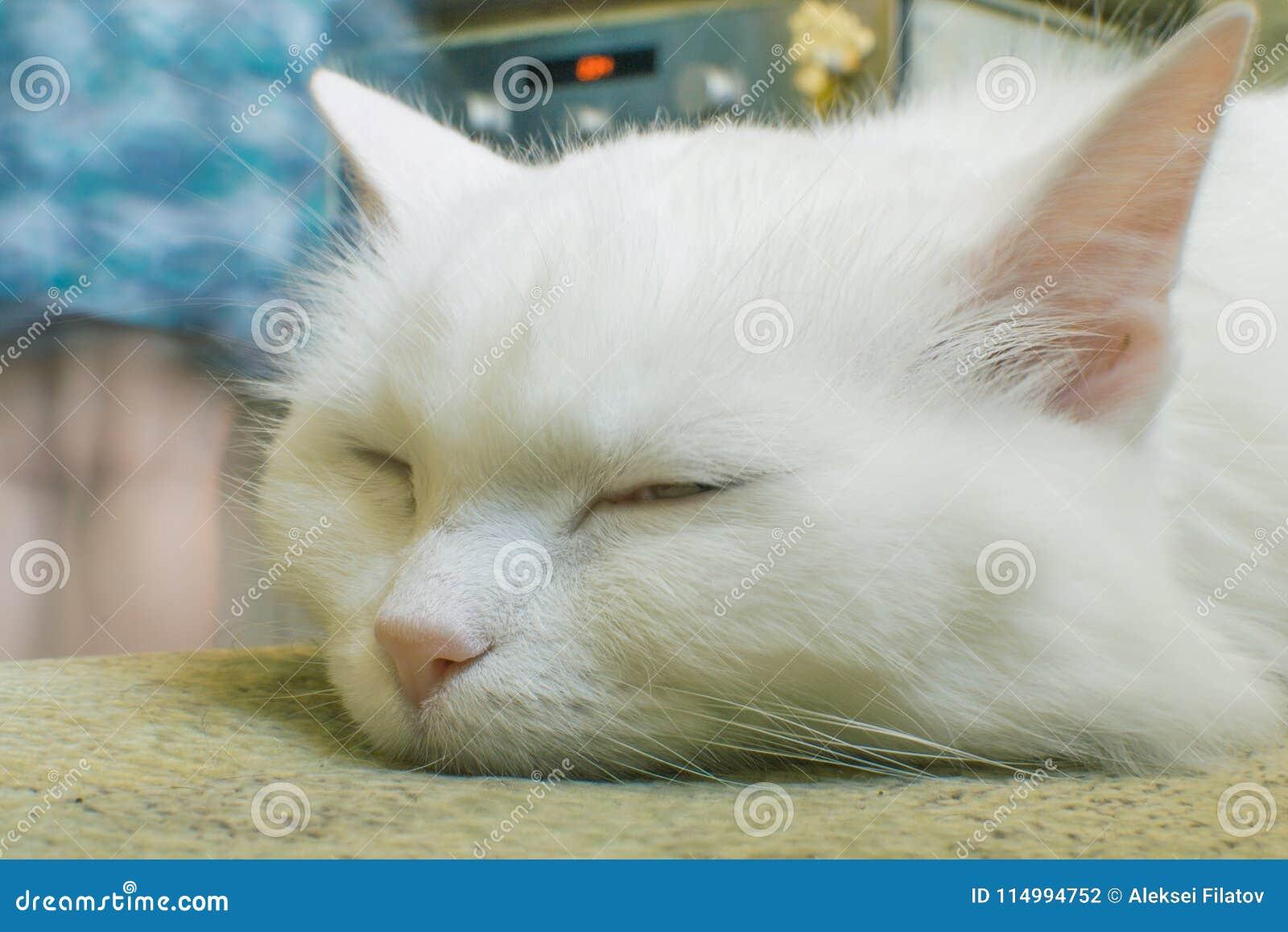 Portrait einer weißen Katze