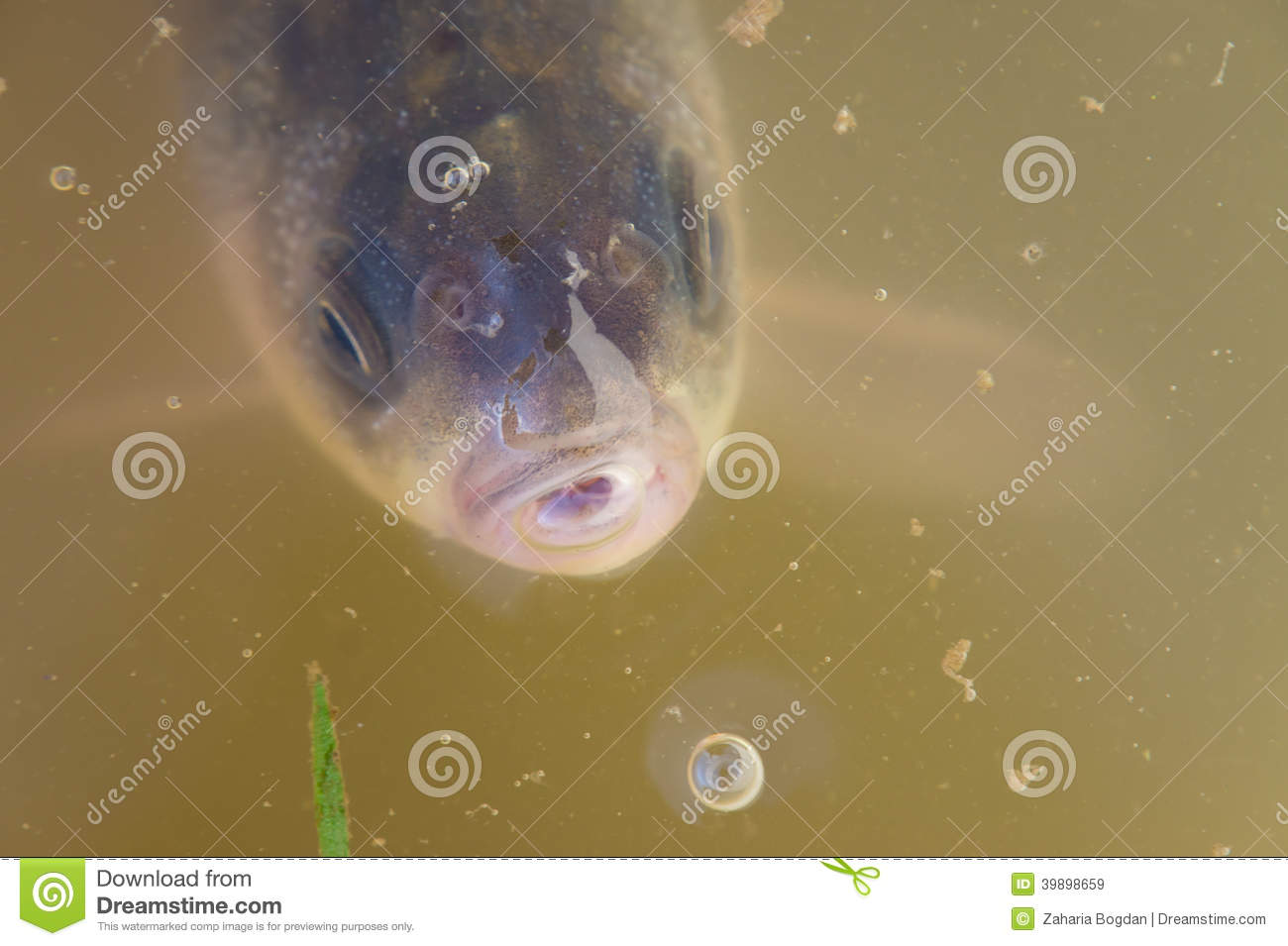 Portrait of fish peeping out of the water stock photo for Dream about fish out of water