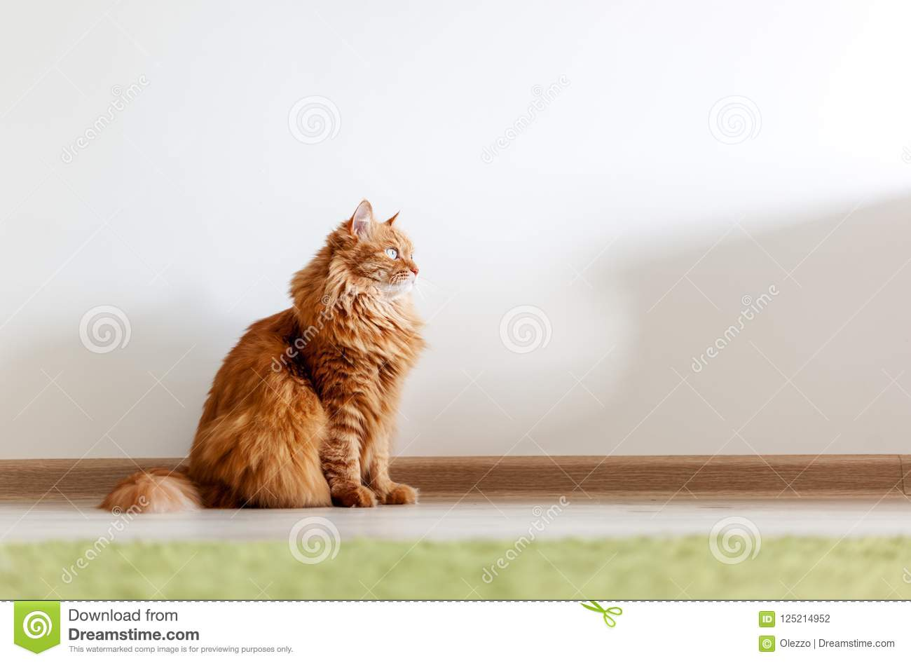 Portrait of a funny beautiful red fluffy cat with green eyes in