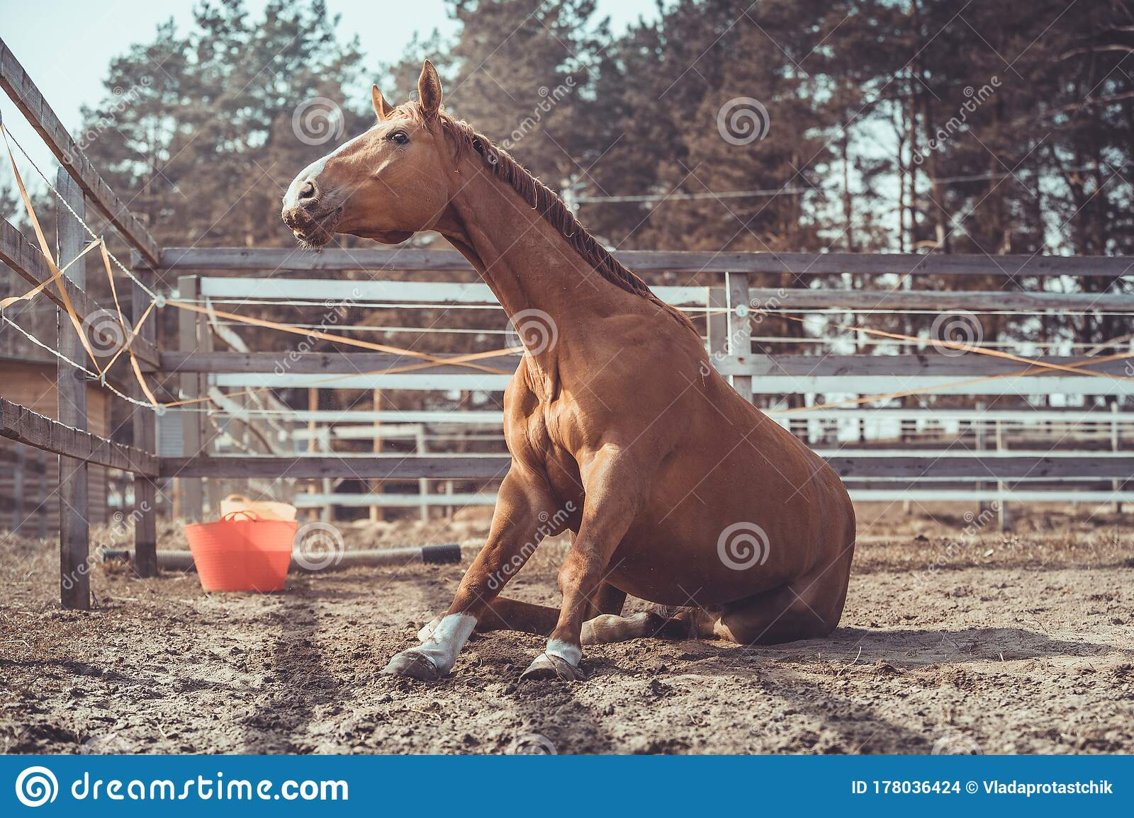 1 059 Funny Chestnut Horse Photos Free Royalty Free Stock Photos From Dreamstime