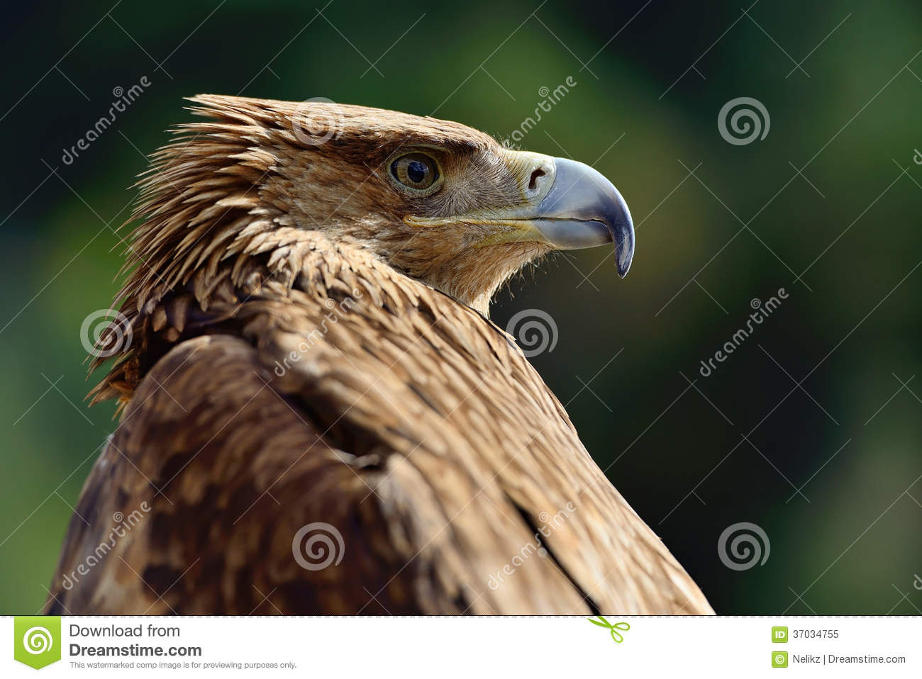 """christian singles in golden eagle It was a prayer that stuck with her during last year's """"1000 prayers for singles  followed immediately by the golden  now back to our prayer eagle."""
