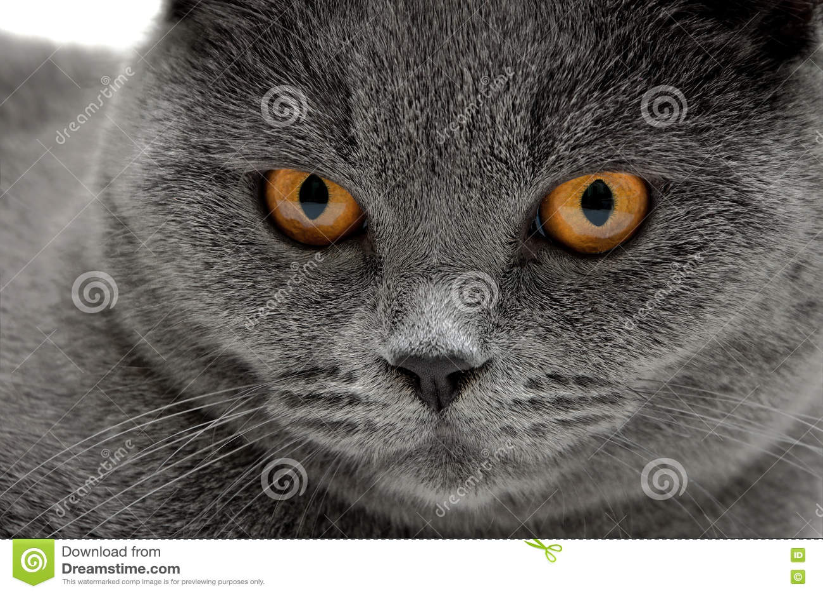cat rescue indiana