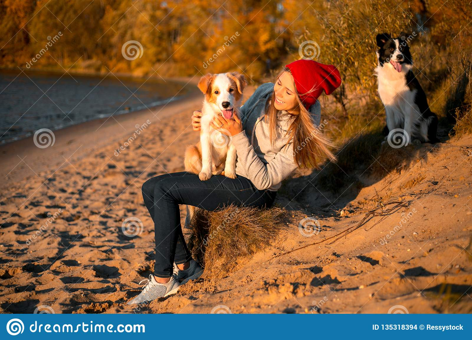 Portrait of happy girl with two funny border collie dog on beach at seaside. autumn yellow forest on background