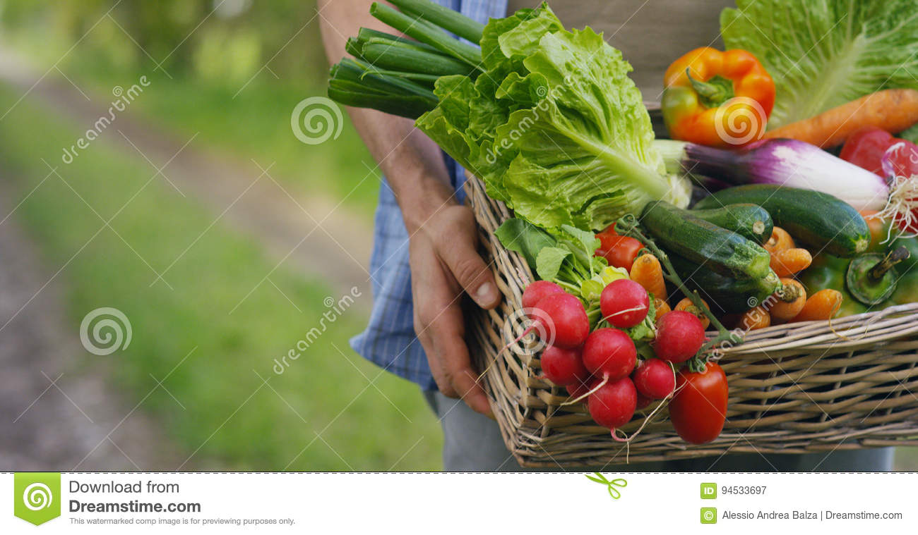 Portrait of a happy young farmer holding fresh vegetables in a basket. On a background of nature The concept of biological, bio pr