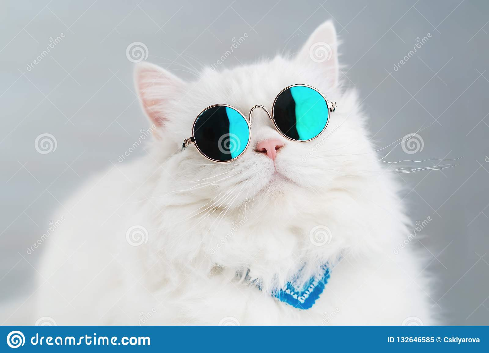 f94346514 Portrait of highland straight fluffy cat with long hair and round sunglasses.  Fashion, style