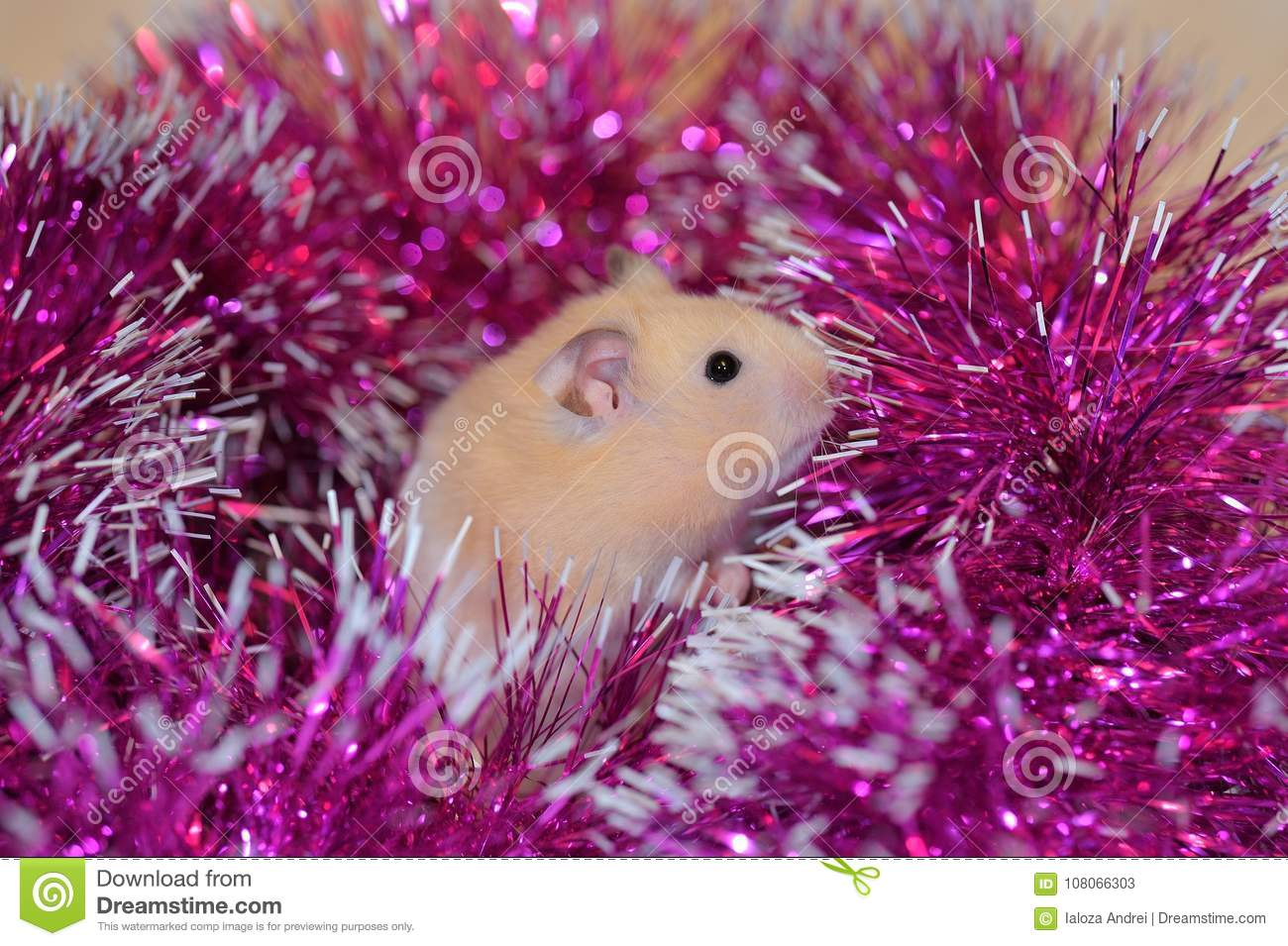 A Syrian Hamster In New Year`s Decorations  Stock Image