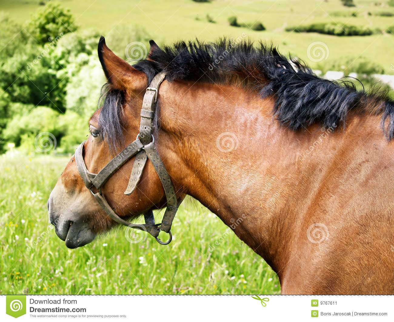 Download Portrait of horse stock image. Image of natural, peaceful - 9767611