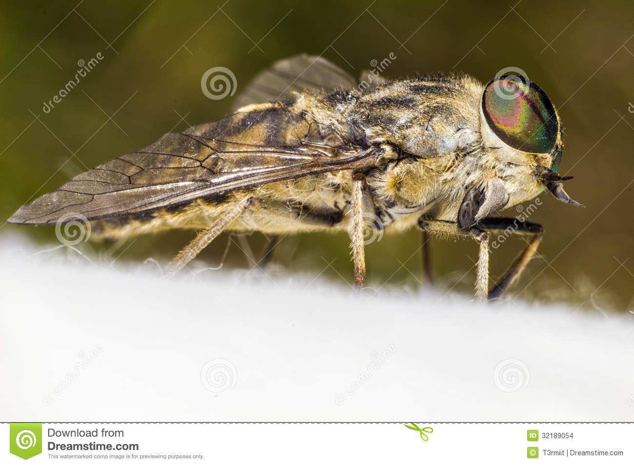 how to keep horse flies from biting you