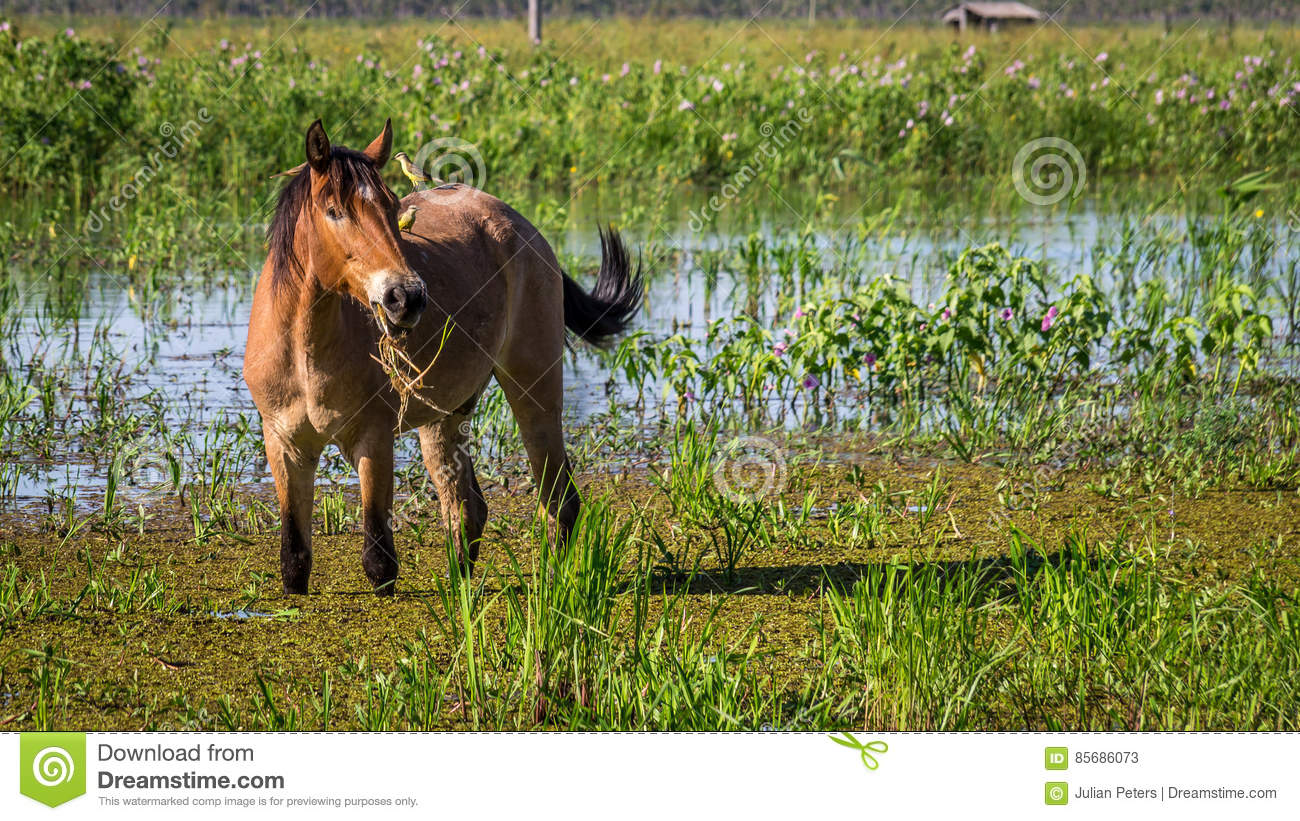 Portrait of a horse with two birds sitting on its back