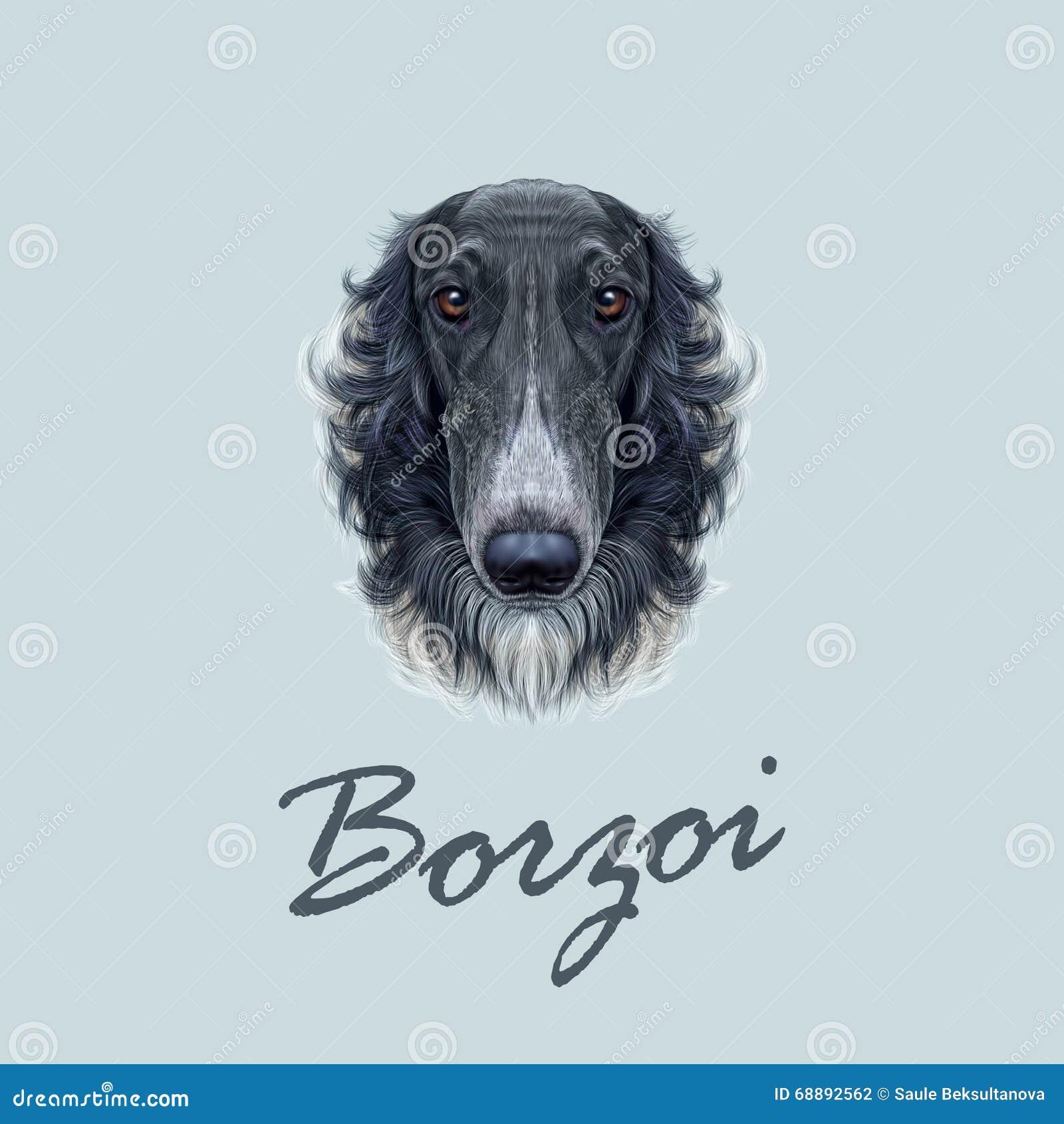 Portrait illustré par vecteur du chien russe de barzoï
