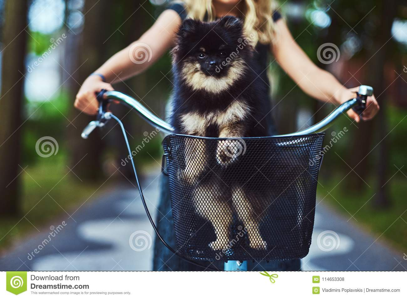 Portrait of a little blonde girl in a casual dress, holds cute spitz dog. Ride on a bicycle in the park.