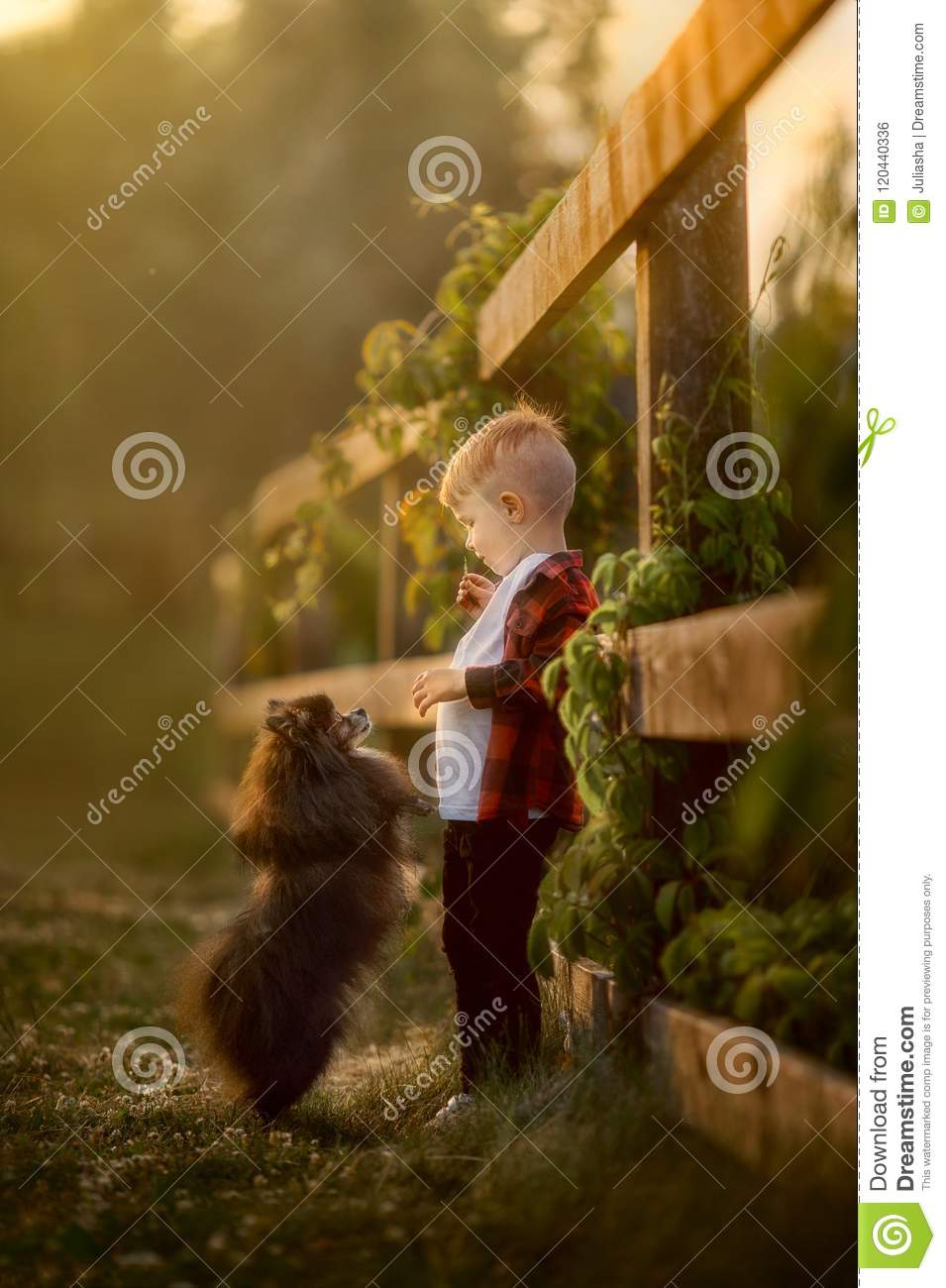 Download Portrait Of A Little Boy With Small Dog In The Park Stock Photo - Image of park, canine: 120440336