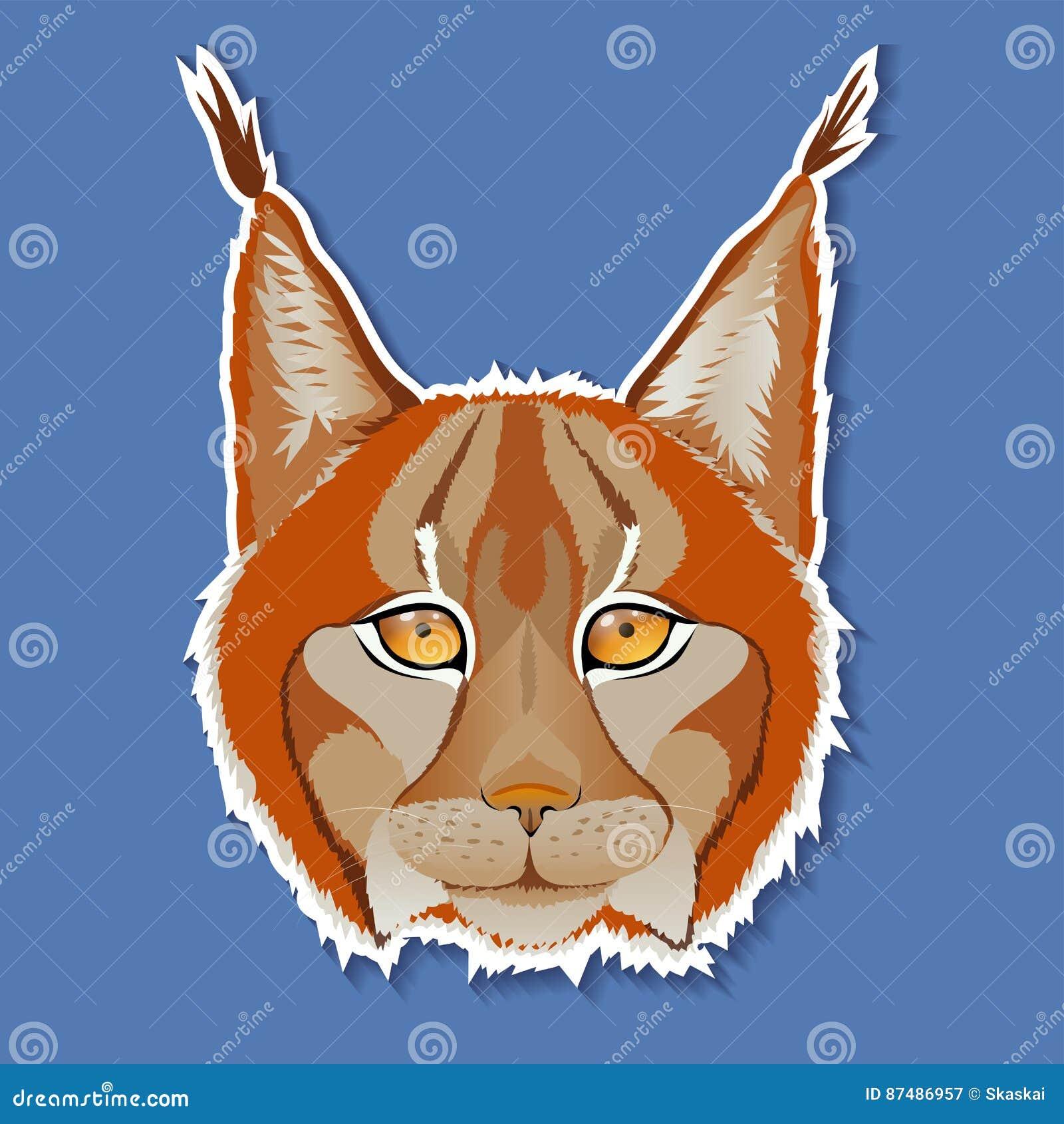 cartoon bobcat cartoons  illustrations   vector stock wildcat school mascot clipart wildcat school mascot clipart