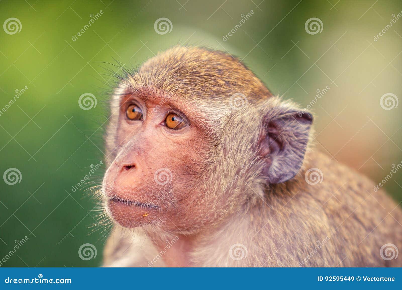 Portrait of Monkey head shot.