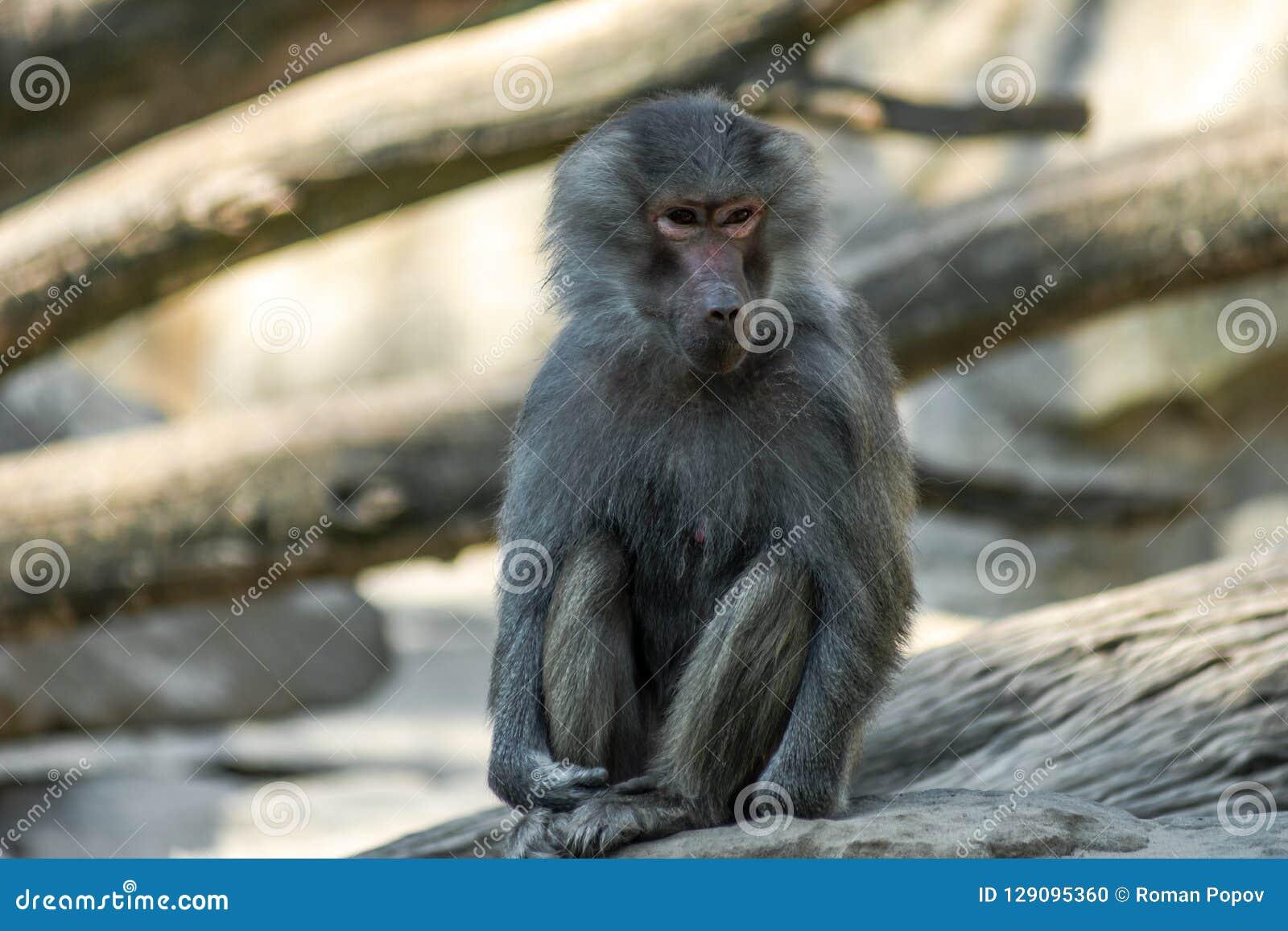 Portrait of monkey sitting alone on the tree
