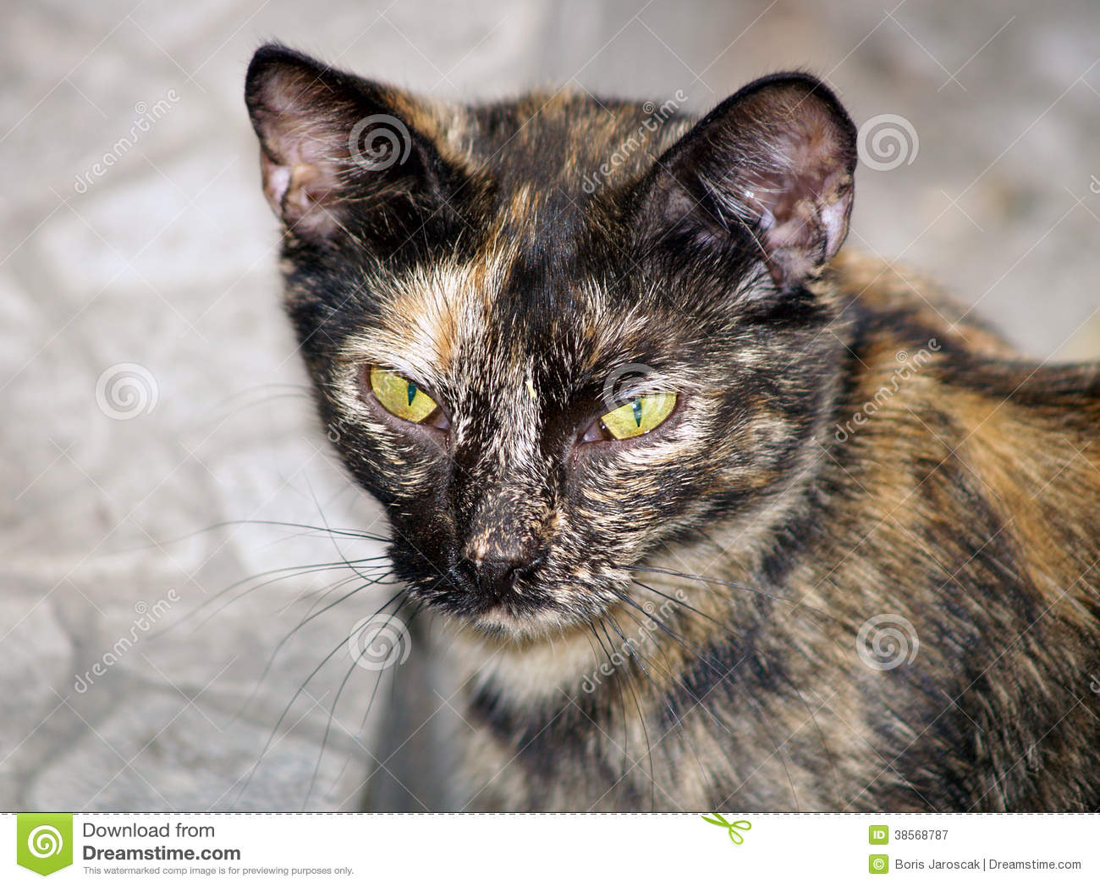 Portrait of a mottled stray cat