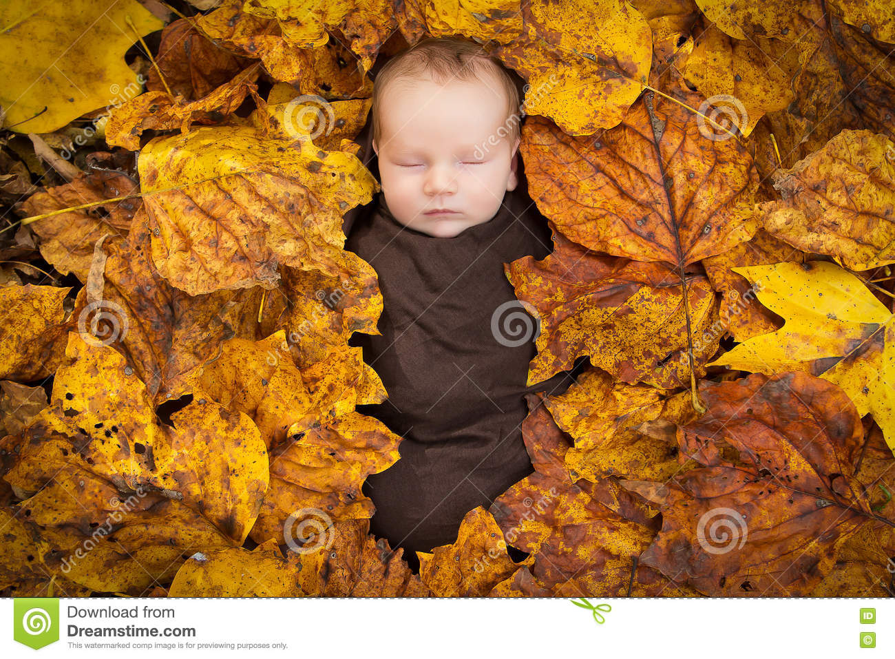 A portrait of a newborn baby wrapped in brown swaddling cloth and surrounded by fall leaves