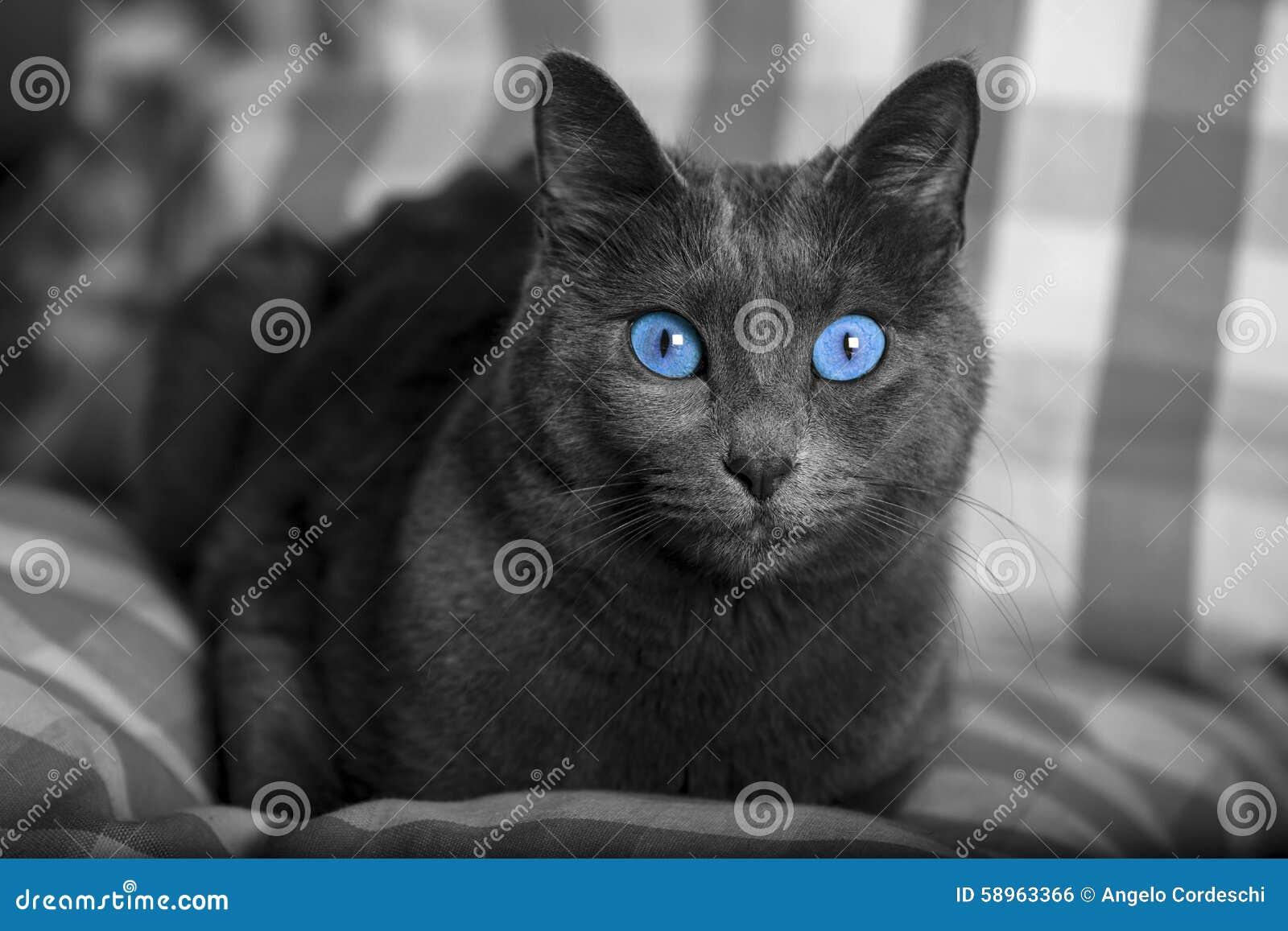 The Black Cat Setings