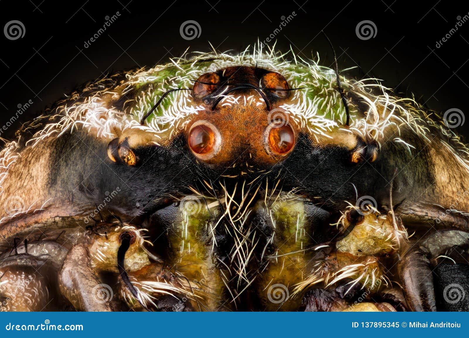 Portrait of a orbweaver spider