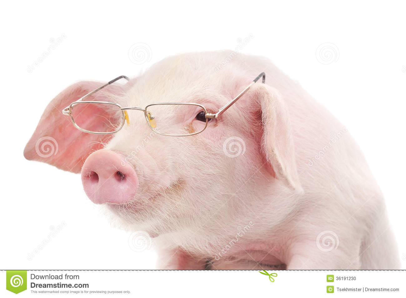 Portrait Of A Pig In Glasses Stock Photo - Image: 36191230